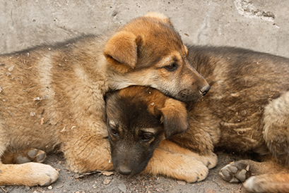 Homeless Puppies Lie On Each Other To Keep Warm